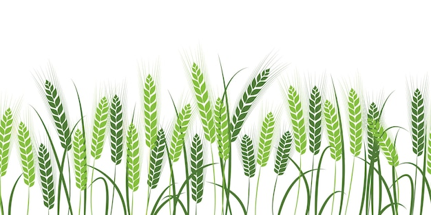 Silhouette of wheat. wheat in the field on a white background.