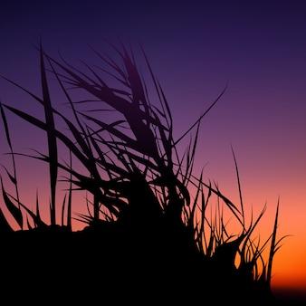 色鮮やかな夕焼けに対するシルエットの草