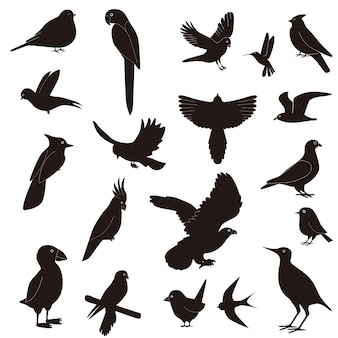 Silhouettes of birds in flight, isolated on white background