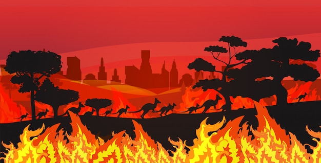 Silhouettes of kangaroos running from forest fires in australia animals dying in wildfire bushfire burning trees natural disaster concept intense orange flames horizontal