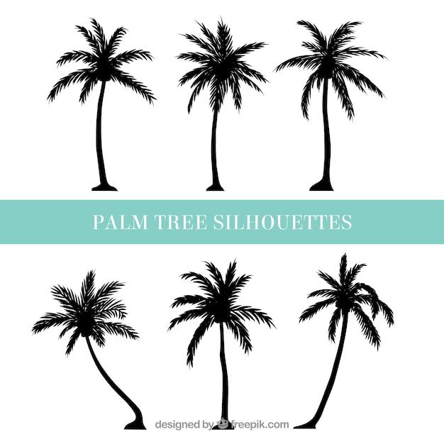 palm vectors photos and psd files free download rh freepik com free vector palm tree illustration free vector palm tree graphics