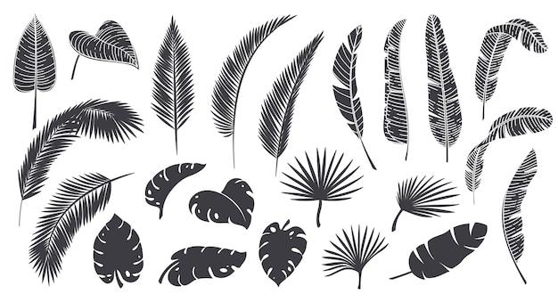 Силуэты тропических листьев. монохромный глиф лесной пальмы монстера папоротник гавайские листья. тропические элементы векторные иллюстрации.