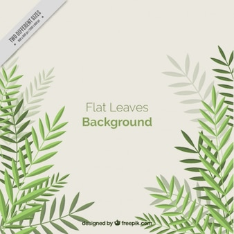 Simple background with flat palm leaves