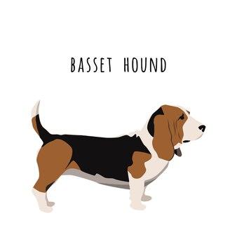 Simple basset hound vector illustration.