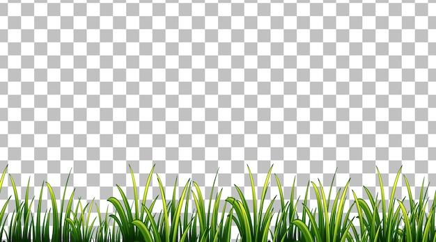 透明な背景のシンプルな芝生フィールド
