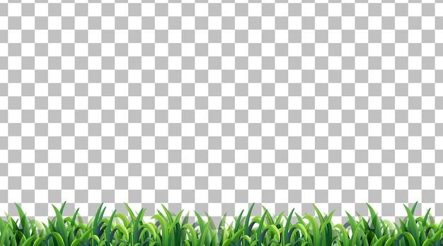 Campo in erba semplice su sfondo trasparente