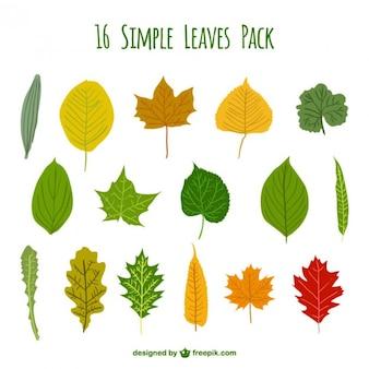 シンプルな葉パック