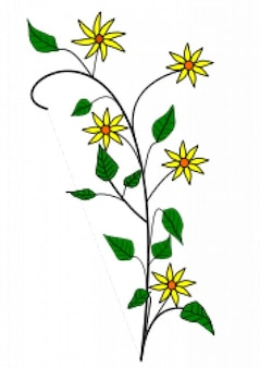 Simple yellow flowers drawing with white background