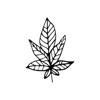 冬と秋の装飾のための片手で描かれた葉。落書きベクトルイラスト。白い背景で隔離