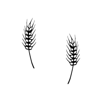Single hand drawn wheat for autumn decoration. doodle vector illustration. isolated on white background