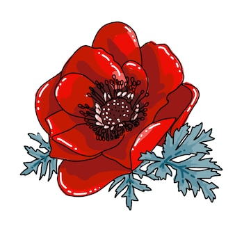Single red blooming poppy flower