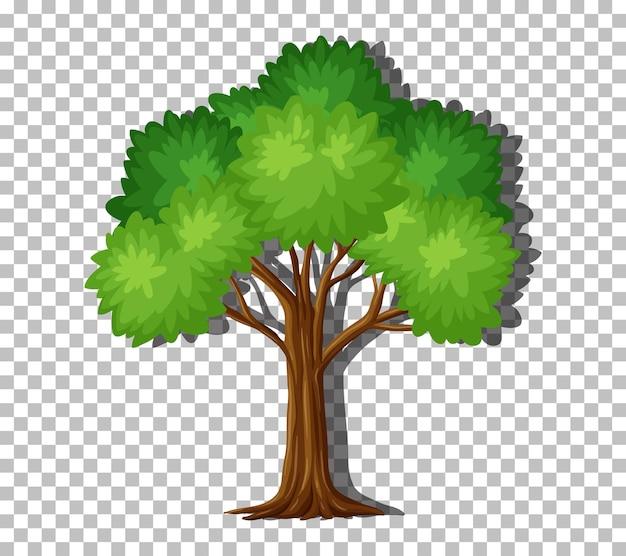투명한 배경에 녹색 잎이 있는 단일 나무