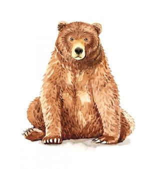 Sitting bear watercolor painting.