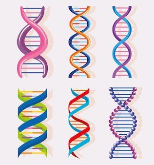 6 개의 dna 분자