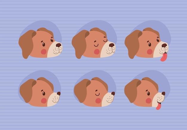 Six dog faces