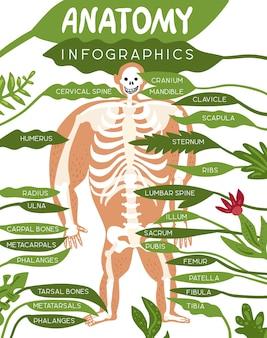 人体画像とコンポーネントの詳細な説明を含むスケルトン解剖学インフォグラフィックレイアウト