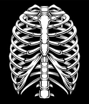 Skeleton body simple illustration