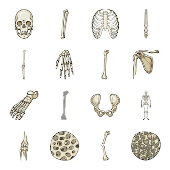 Skeleton cartoon icon set