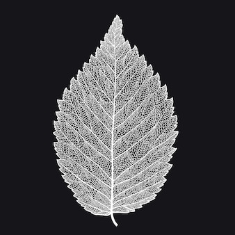 Скелетонизированный лист на черном фоне