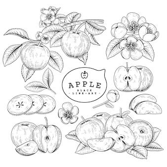 Эскиз яблочный декоративный набор. рисованной ботанические иллюстрации. черный и белый с линией искусством, изолированные на белом фоне. фруктовые рисунки. элементы в стиле ретро.