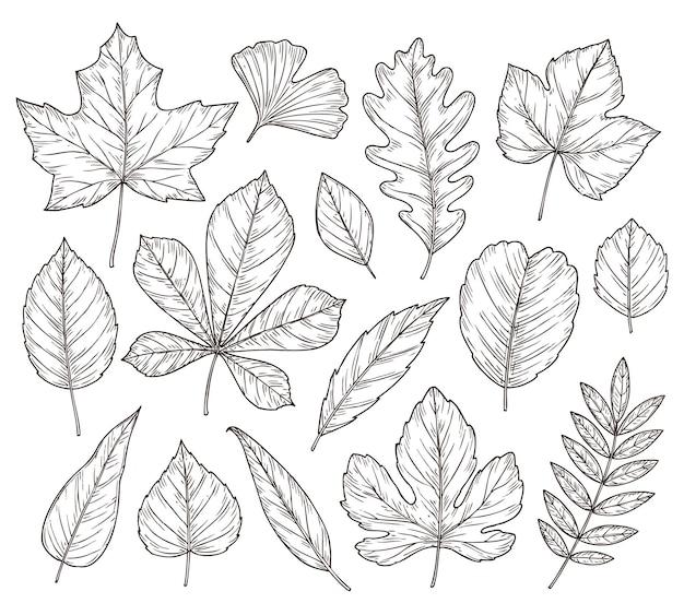 단풍을 스케치합니다. 가을 잎, 손으로 그린 빈티지 단풍 요소. 고립 된 숲 메이플 오크로 웬 나무, 식물학 자연 벡터 일러스트 레이 션. 시즌 마가목 잎, 단풍 및 꽃 자연 스케치