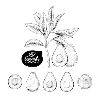Эскиз авокадо декоративный набор. рисованной ботанические иллюстрации. черный и белый с линией искусством, изолированные на белом фоне. фруктовые рисунки. элементы в стиле ретро.