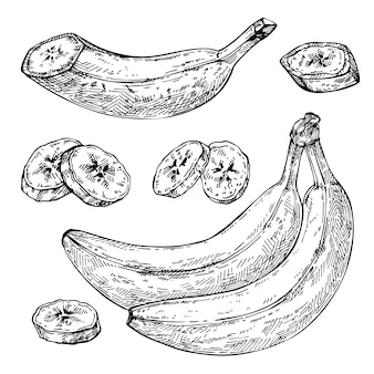 スケッチバナナ孤立した手描きの束スライスされたバナナの部分