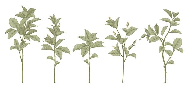 Набор эскизов ботаники. листья магнолии и цветочные рисунки. красивое линейное искусство. иллюстрации.
