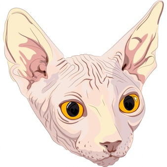 Sketch the cat breed sphynx