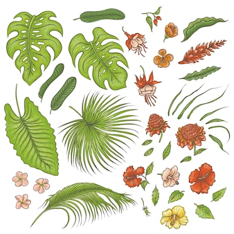 Sketch colored texture set of isolated elements. green leaves of tropical plants, exotic pink and red flowers buds. graphic outline drawing collection herb and vegetation monsoon rainforest.