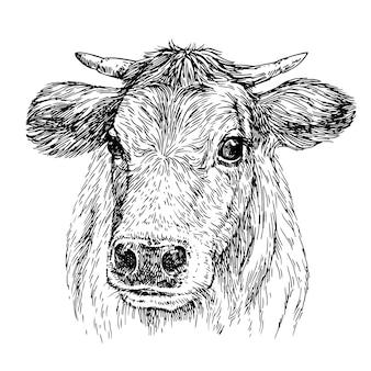 Эскиз корова крупным планом ручной обращается реалистичный портрет коровы чернила иллюстрации