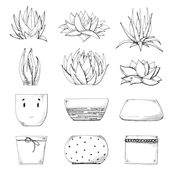 Sketch of different pots and succulents. vector illustration of a sketch style.