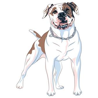 Эскиз собаки американский бульдог породы