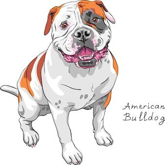 Sketch dog american bulldog breed