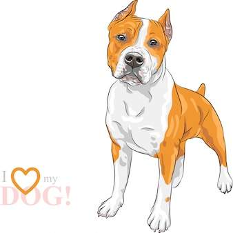 Sketch dog american staffordshire terrier breed