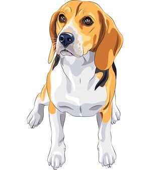 座っている犬ビーグル犬のスケッチ