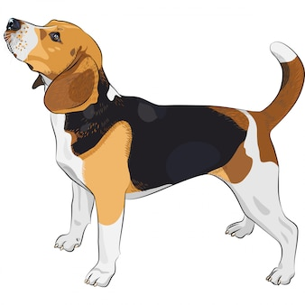 Эскиз собаки бигль породы