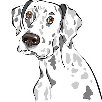 スケッチ犬ダルメシアン品種のクローズアップの肖像画