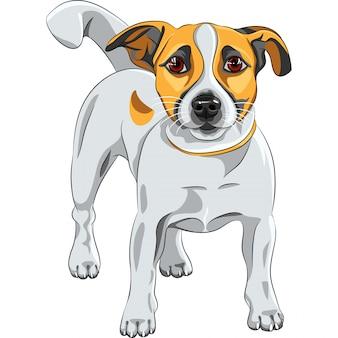 ジャックラッセルテリア犬をスケッチします。