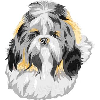 犬シーズー犬のスケッチ