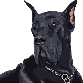国内犬ブラックグレートデーンの品種をスケッチします。