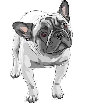 飼い犬フレンチブルドッグの品種をスケッチします。 Premiumベクター