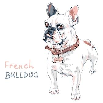 Sketch domestic dog french bulldog breed Premium Vector