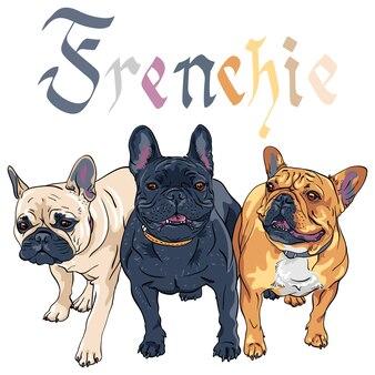 Sketch domestic dog french bulldog breed