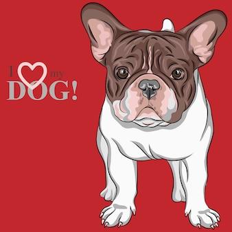 国内犬フレンチブルドッグの品種をスケッチします。