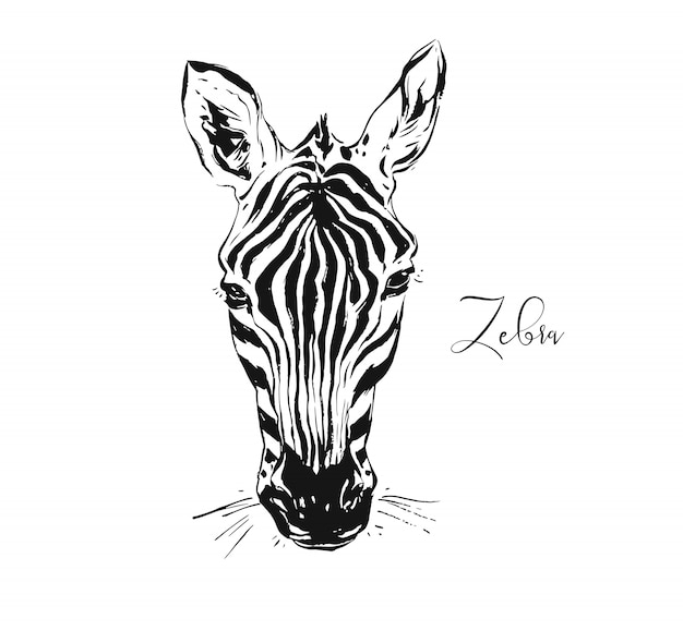Sketch drawing illustration of wildlife zebra head isolated on white background