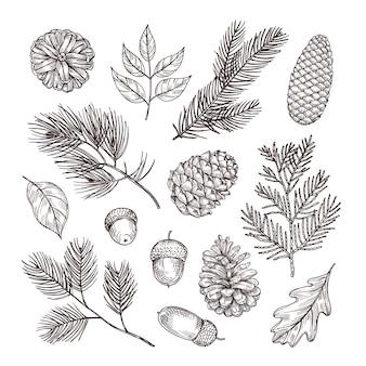 전나무 가지를 스케치하십시오. 도토리와 소나무 콘. 크리스마스 겨울과 숲 요소입니다. 손으로 그린 빈티지 고립 된 세트