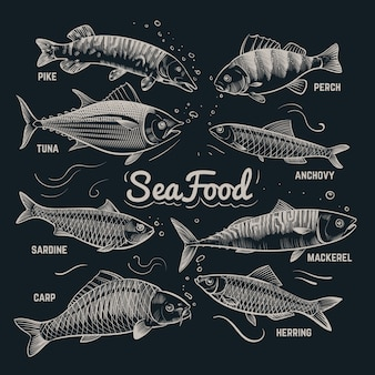 Sketch fishes seafood. herring, trout, flounder, carp, tuna, sprat hand drawn outline fish collection in vintage style