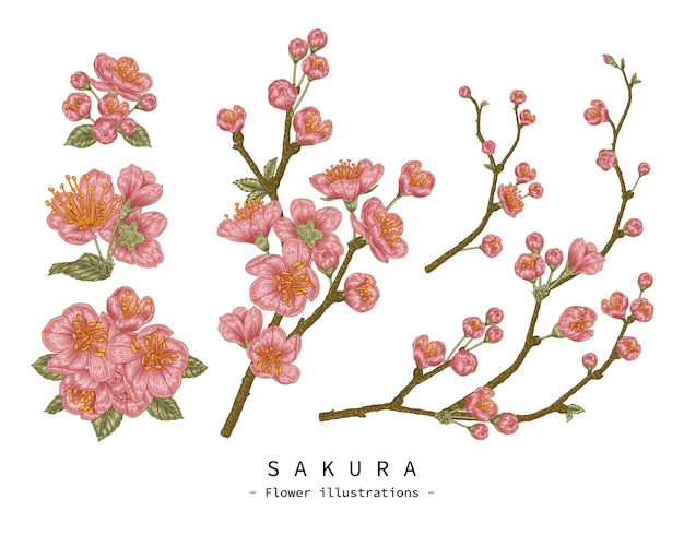 꽃 장식 세트를 스케치합니다. 벚꽃 꽃 그림. 빈티지 라인 아트 흰색 배경에 고립입니다. 손으로 그린 식물 삽화. 요소.