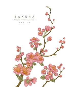 Sketch floral decorative set. cherry blossom flower drawings.